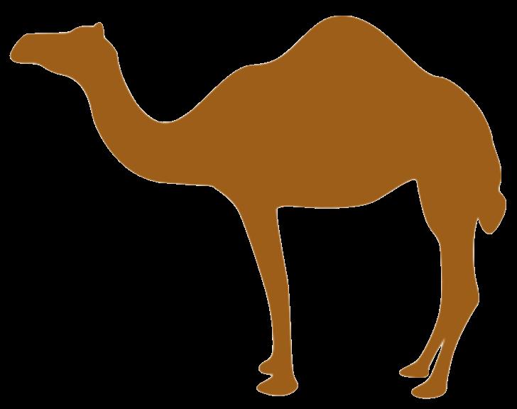 Tech Camel